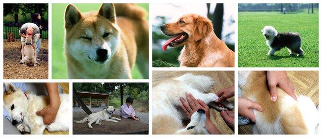 犬の整体師養成