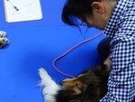 犬の整体師認定