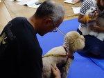 犬の整体師認定2016