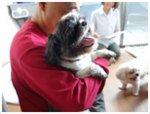 犬の整体師