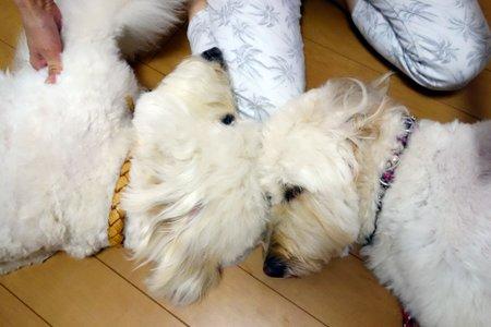 犬の整体師ステップアップ講座