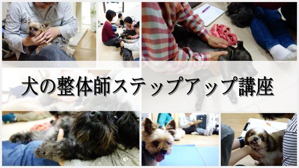 犬の整体ステップアップ講座