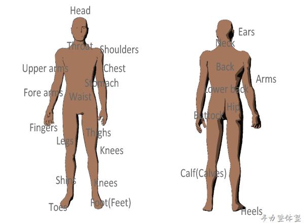 英語で人体