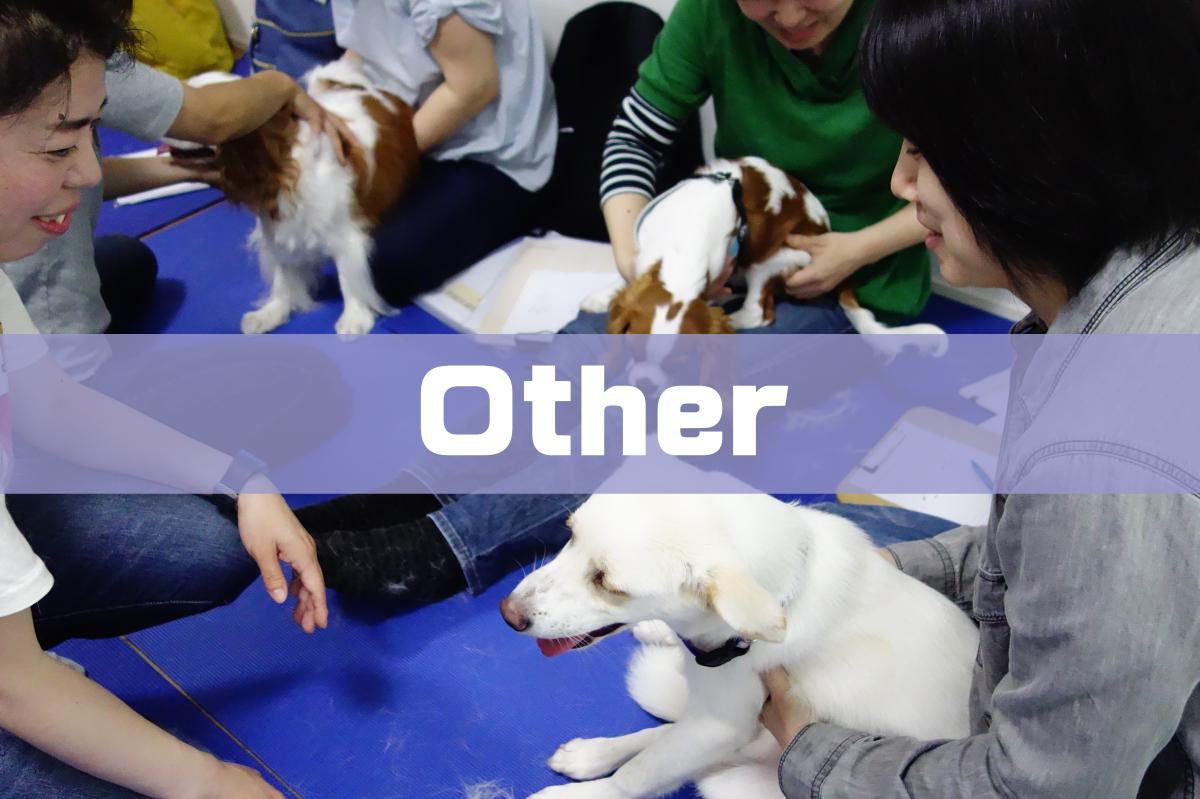 犬の整体やZoomでの通信講座もやってます