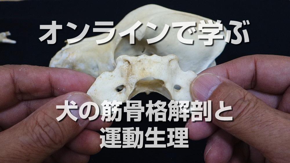 【通信講座】犬の筋骨格機能解剖と運動生理